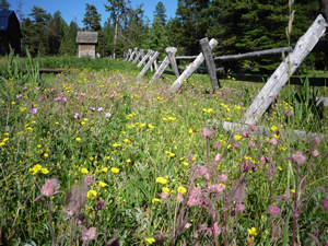 Outpost wildflowers