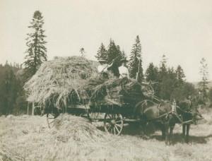SBS--photo of hay wagon--cropped & downsized